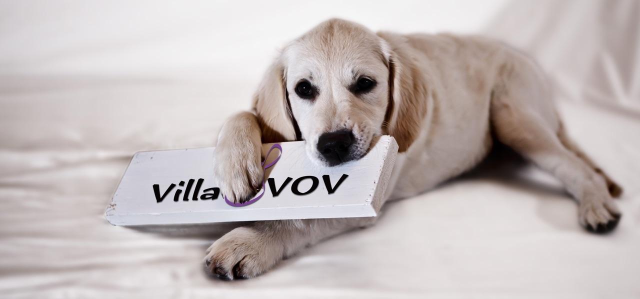 Hundepasning  og hundemassage - forkæl din hund